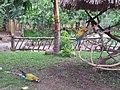 Furesa (Fundación Refugio Salvaje) Jayaque - panoramio.jpg