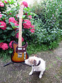 G&L ASAT Classic Bluesboy Semi Hollow T-Style - Barnyard-Blues-Dog meets.jpg