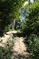 Główny Szlak Beskidzki - Path to Smerek 03.jpg