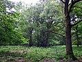 GOC Berkhamsted & Frithsden 021 Ashridge Estate (28413943066).jpg