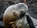 Galapagos (45958330074).jpg