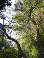 Gardenology.org-IMG 2468 ucla09.jpg