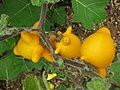 Gardenology.org-IMG 7330 qsbg11mar.jpg