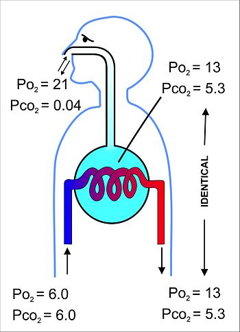 discuss the physiology of the three The wall of the heart consists of three layers: the epicardium (external layer) heart structure - anatomy & physiology learning resources vetstream.