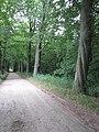 Gedraaide beuk (31273103295).jpg
