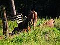 Gehege Wisent Wildpark Alte Fasanerie Klein-Auheim.JPG