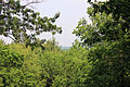 Gfp-wisconsin-lapham-peak-state-park-through-the-trees.jpg
