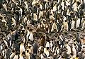 Giant petrel and king penguins.jpg