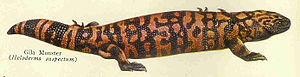 Gila monster - Plate from the Century Cyclopedia depicts the Gila monster