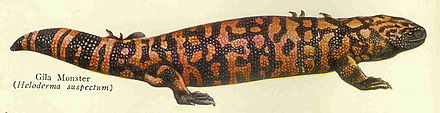 Plate from the Century Cyclopedia depicts the Gila monster Gila monster ncd 2012.jpg