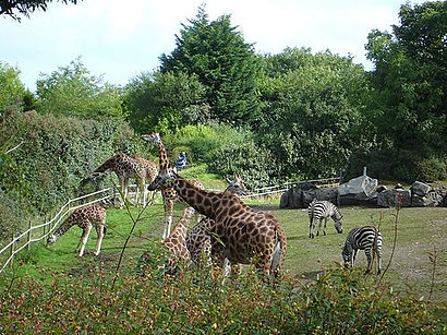 How to get to Belfast Zoo in Northern Ireland by Bus Moovit View