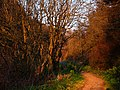 Glen Maye, evening sunlight - geograph.org.uk - 777820.jpg