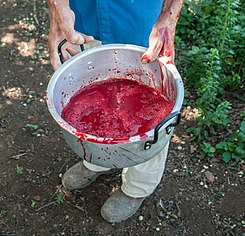 Goat blood for Christmas Lunch.jpg