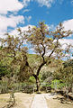 Gortys Plane Tree (5217013928).jpg