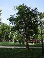 Gradski Park-Skopje (140).JPG