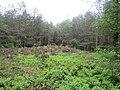 Grafheuvel nabij zevenlindenweg lage vuursche 1.JPG