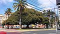 Gran árbol, calle Brasil, Valparaíso, Región de Valparaíso, Chile. - panoramio.jpg