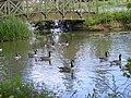 """Great Billing Aquadrome """"water life"""" - geograph.org.uk - 662432.jpg"""