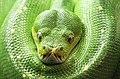 Green Collar (28030348041).jpg