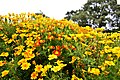 Greenhead Park - panoramio (1).jpg