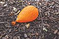 Ground-orange-balloon-deflated (24300687946).jpg