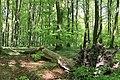 Hästhagens naturreservat 2019-2.jpg