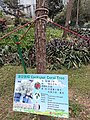 HK 中環 Central 遮打花園 Chater Garden flora green leaves n trees March 2020 SS2 18.jpg