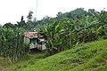 Habitations à São João dos Angolares (São Tomé) (4).jpg