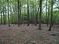Hambach forest 11.jpg