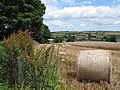 Harvesting the barley - geograph.org.uk - 508713.jpg