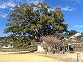 Hayasame shrine, Tokushima.jpg