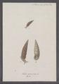 Helix perversa - - Print - Iconographia Zoologica - Special Collections University of Amsterdam - UBAINV0274 089 01 0094.tif