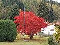 Herbstfarben - panoramio (5).jpg