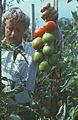 Here such crop (80-ies). (7879507128).jpg