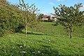 Herridge's Orchards - geograph.org.uk - 69529.jpg