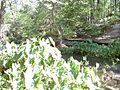 Hidden Serenity - panoramio (2).jpg