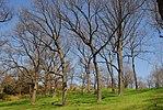 High Park, Toronto DSC 0234 (17393247301).jpg