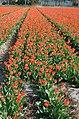 Hillegom, Netherlands - panoramio.jpg