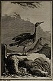 Histoire naturelle des oiseaux (1781) (14564596848).jpg