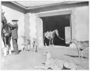 Sierra Bonita Ranch - Henry C. Hooker mounts a horse near several of his greyhound dogs.