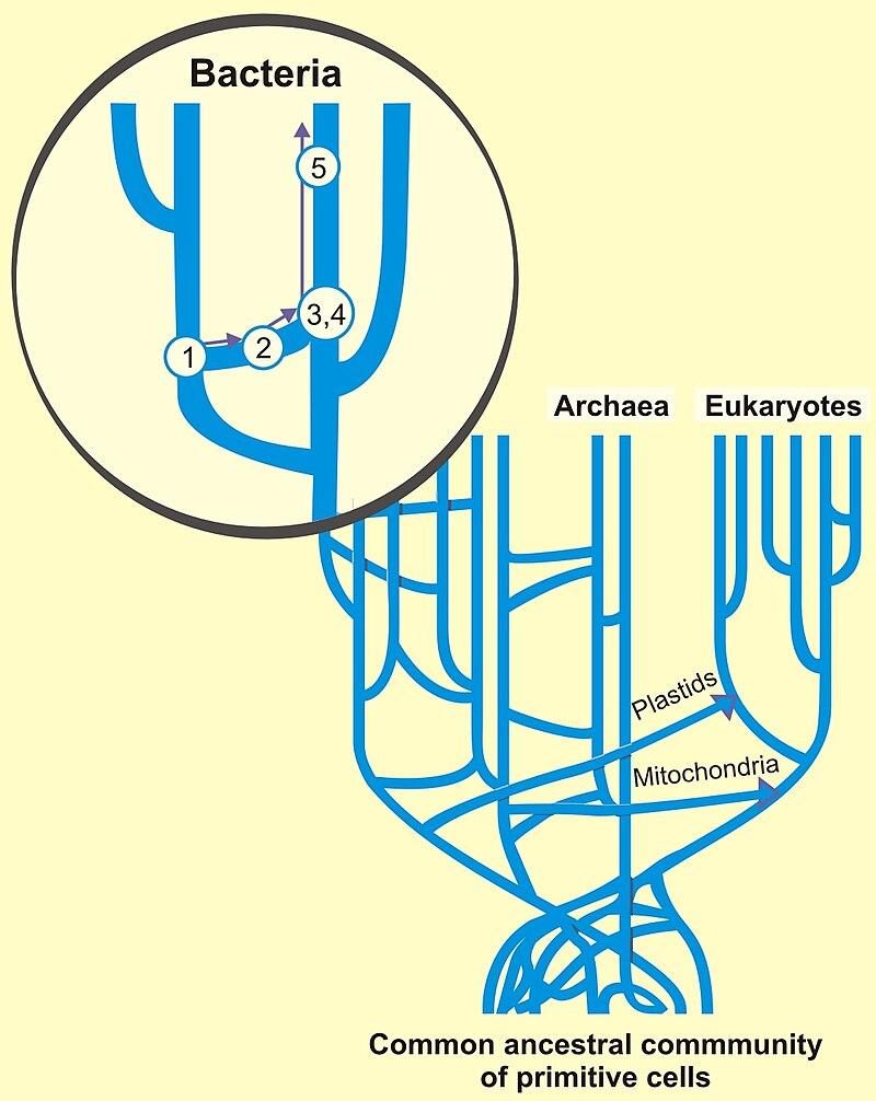 Horizontal-gene-transfer.jpg