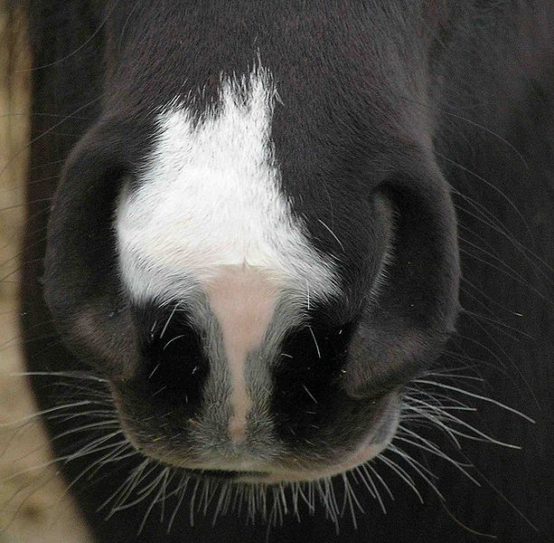 Equine Influenza - What You Need To Know