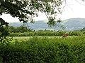 Horse grazing - geograph.org.uk - 838910.jpg