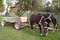 Horses in Kamenka.jpg