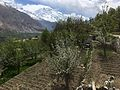 Hunza Valley view from Duikar with apple blossoms.jpg