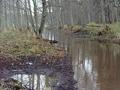 Hwoźna-rzeka w Bialowieskim PN.png