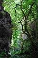 I muschi delle Grotte del Bussento.jpg