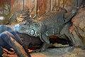 Iguane (Zoo-Amiens).JPG