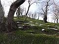 Il castagneto sopra Tirli - panoramio.jpg