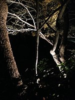 File:Illuminated forest near Mikami Shrine 1.jpg